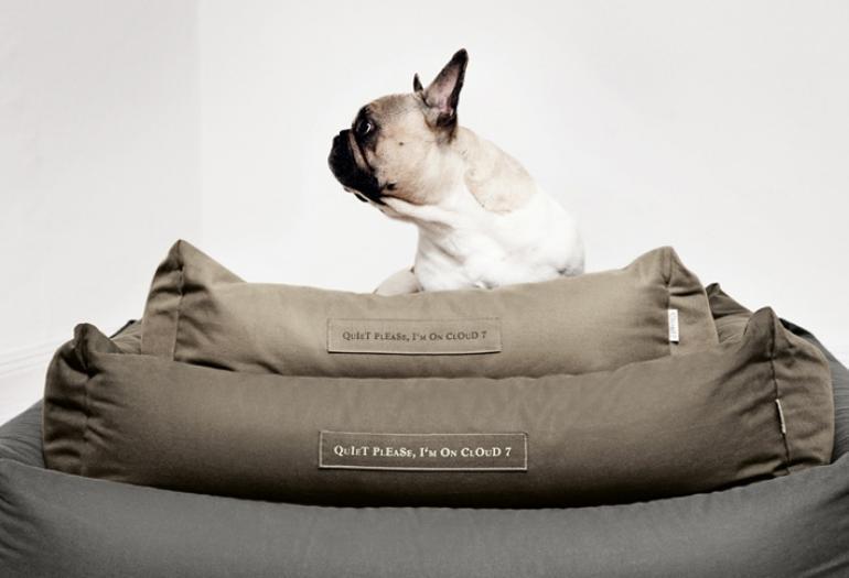 bully traum franz sische bulldoggen welpen z chter berlin. Black Bedroom Furniture Sets. Home Design Ideas